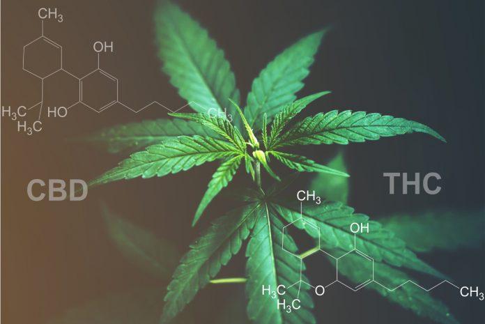 Co oznacza skrót THC? - To nic strasznego!